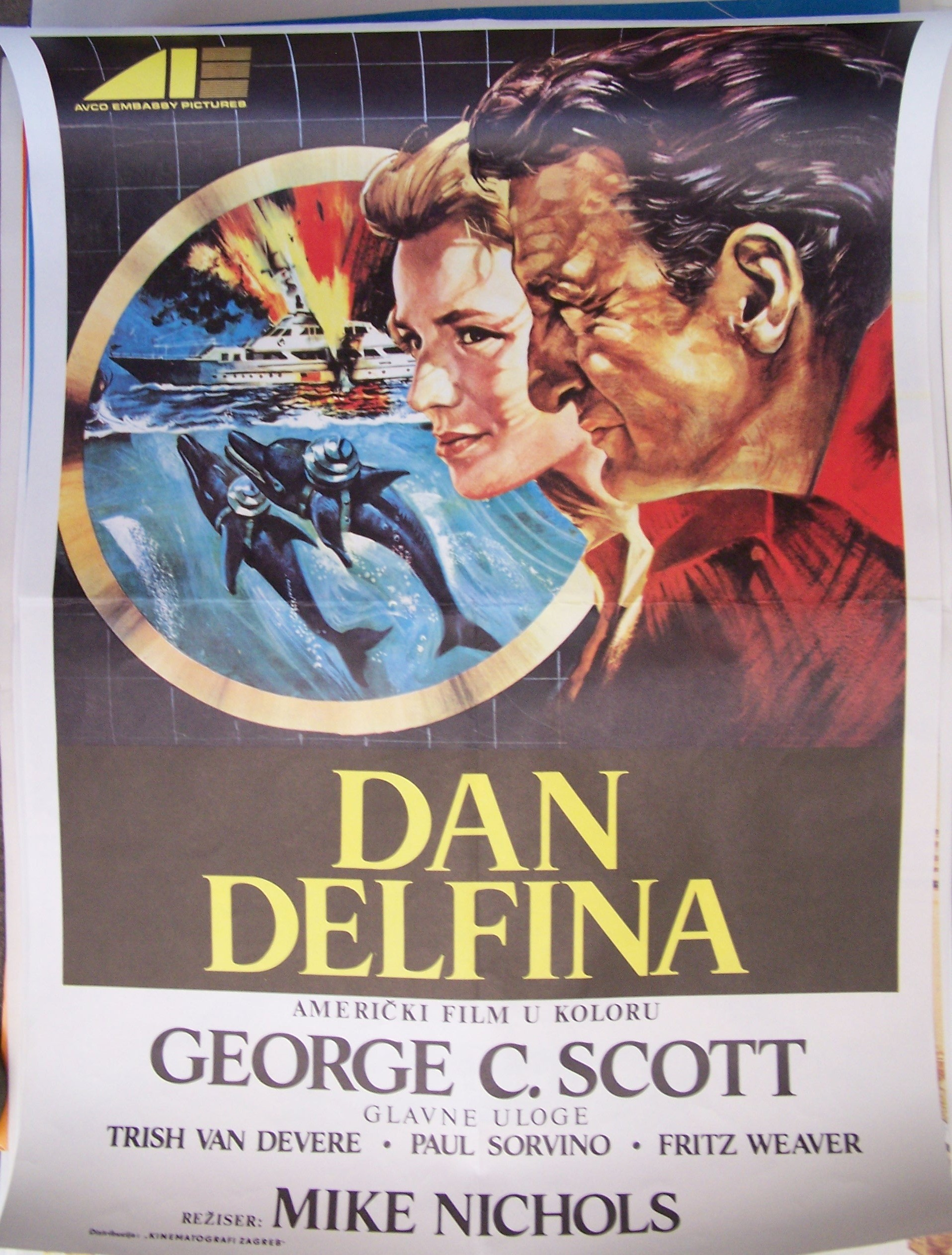 Dan Delfina